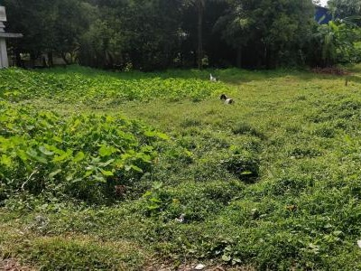 Residential Land For Sale at Elamkunnapuzha,Vypin, Ernakulam